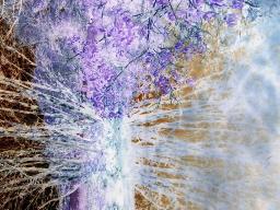 Webinar: Reinigung deiner Seele