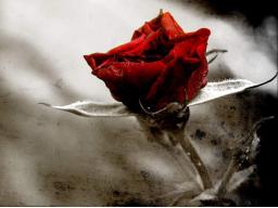 Webinar: Wie man mit Schuldgefühlen umgehen kann!!