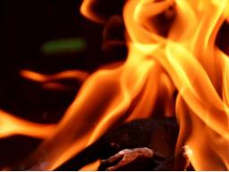Webinar: Amazonas brennt
