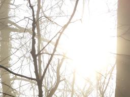 Webinar: Geführte Meditation und Energiearbeit - Entspannung und Stärkung
