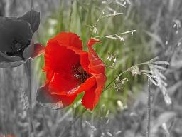 Webinar: Eros und Reife Blütenessenzen für einen neuen Lebensabschnitt