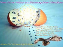 Webinar: ॐAKTIVIERUNG deiner Lebensblume(Merkaba)
