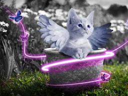 Webinar: Einen Abend mit den Engeln verbringen