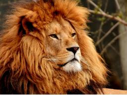 Webinar: Wochenangebot - Löwenmut