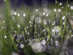 Webinar: Gruppen-Heilübertragung bei Lichtkörpersymptomen