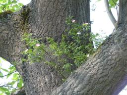 Webinar: Der Rat der Bäume