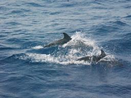 Webinar: Delfin-Energie - Verbindung zur Wunscherfüllung