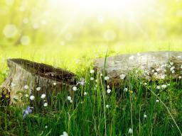 Webinar: Naturwesen Channeling: Botschaften für dich
