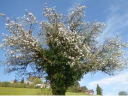 Webinar: Die Arbeit mit unserem Lebensbaum - ein Intensivwebinar mit Einzelarbeit