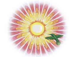 Webinar: Innerer Wachstum - Geführte Mediation