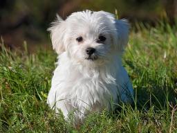 Webinar: Reiki für Ihr Haustier