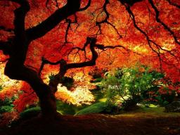 Webinar: Die Magie der Bäume - Rituale mit Bäumen