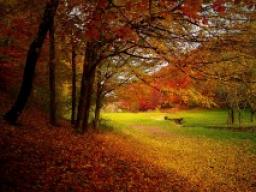 Webinar: Dein Monat Oktober