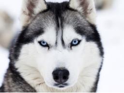 Webinar: ♥ Tierlichtsprache ♥ Einweihung ♥ Urkunde