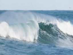 Webinar: Die Matrix-Welle bewegt - ich vertraue!
