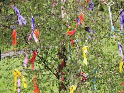 Webinar: Jahreskreisfest ♥ - Beltane, das Maifest