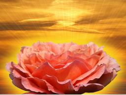 Webinar: Seraphimreinigung Deines Energiekörpers
