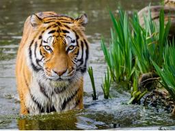 Webinar: Erwecke den Tiger in Dir