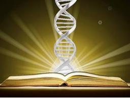 Webinar: DEIN SPIRITUELLES ABSTAMMUNGSBUCH - Zurück zu Deiner Ur-Identität und Deinem göttlichen Erbgut - Finde Deinen Platz