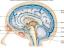 Webinar: Kopfschmerzen? Migräne?