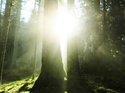 Webinar: Erlösende und heilsame Energien mit Jesus und Mutter Maria