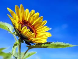 Webinar: Jahreskreisfest ♥ - Sommersonnenwende