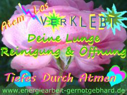 Webinar: OrganReinigung-Deine Lunge