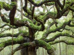 Webinar: Schicksalsknoten lösen im Ahnenbaum
