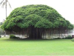 Webinar: Geführte Meditation zum Klimawandel? Werde zum Baum