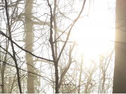 Webinar: Das Herz als Transformator - Geführte Meditation