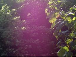 Webinar: Der Sonnenweg im Wassermann