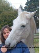 Kontakt zur Tierseele Daniela Gröll